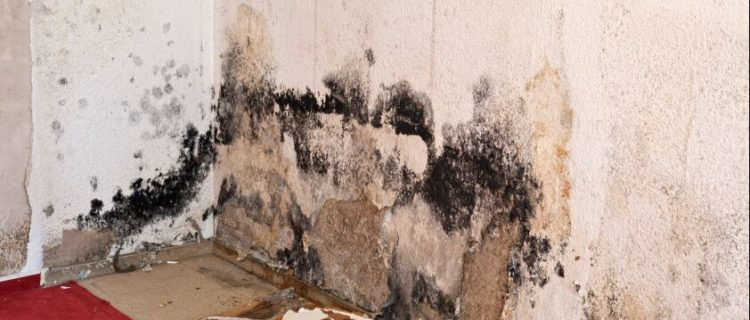 Water Damage and Mould in Building Inspections in Adelaide